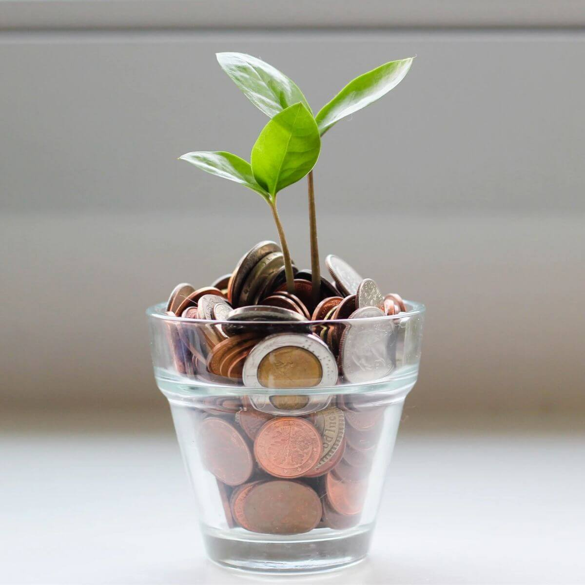 Glass of coins with a plant growing out of it.