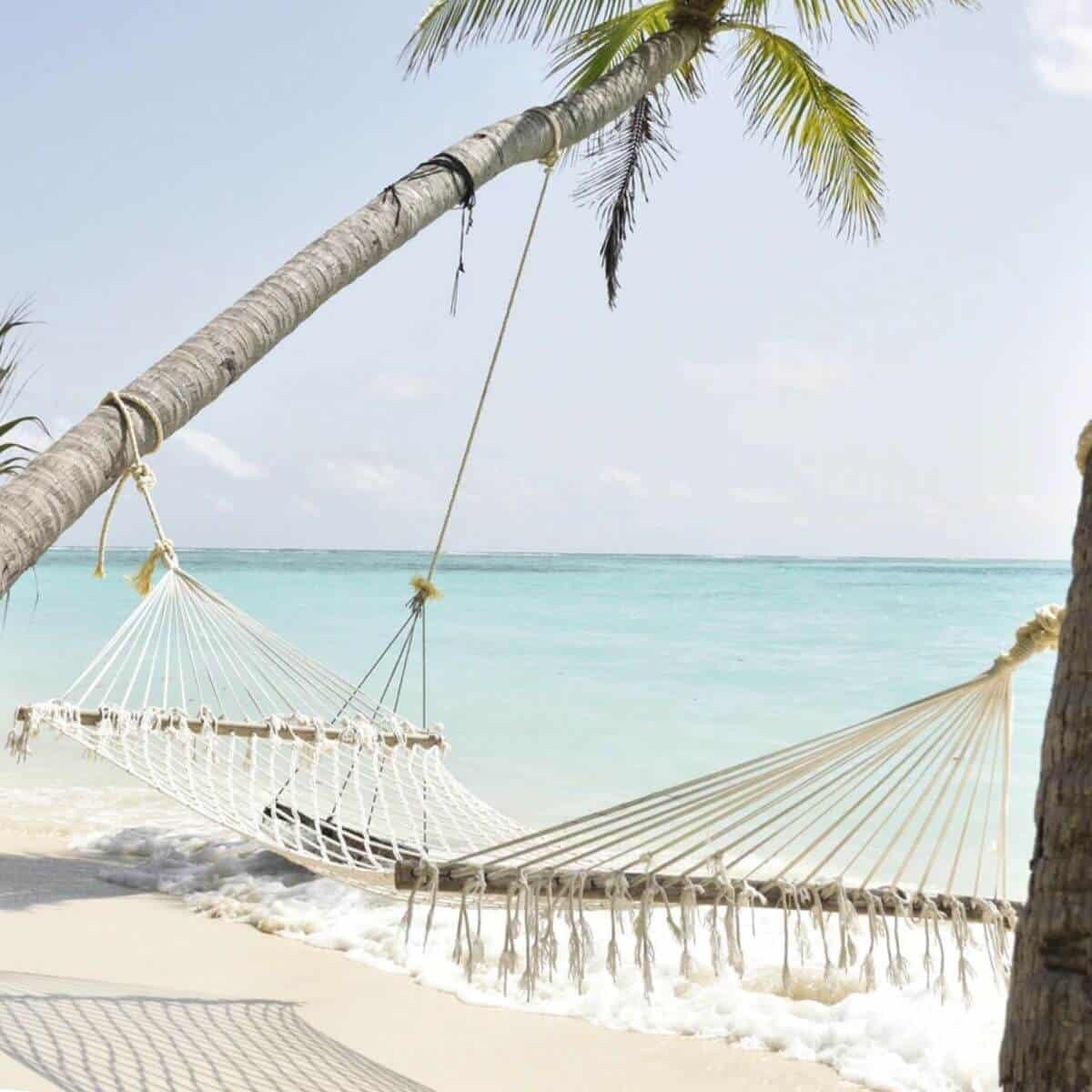 Hammock on a beach with palm trees.